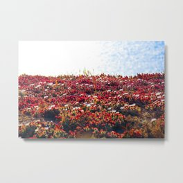 closeup red flower with blue ocean background in summer Metal Print