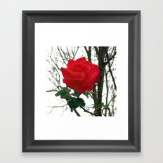 Spring Rose Framed Art Print