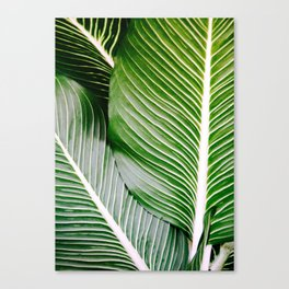 Big Leaves - Tropical Nature Photography Canvas Print