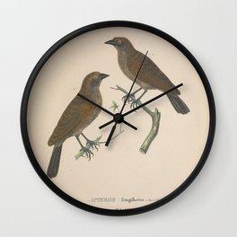 Pale Cowbird icterus fringillarius Wall Clock