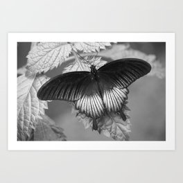 Butterfly - Black and White Art Print