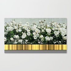 Wild white roses  with golden ribbon Canvas Print