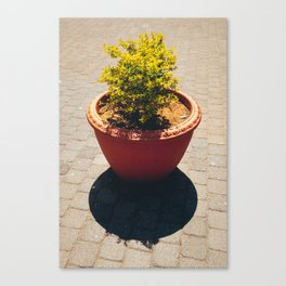 Vivid Green Symmetry Canvas Print