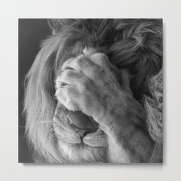 Even Lions Have Bad Days - The Lion Sleeps Tonight black and white photograph  Metal Print