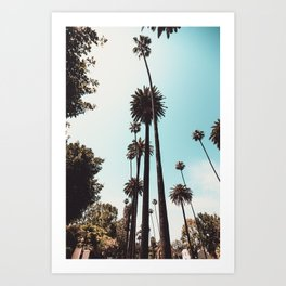 Beverly Hills California Palms Los Angeles Art Print