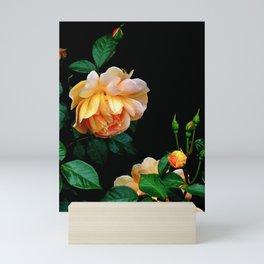 Heavy Hangs the Head of Beauty-Apricot Rose Mini Art Print