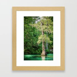 Florida Cypress Tree and Spring Framed Art Print