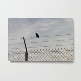 Single Black Bird on a Barbed Wire Fence Metal Print