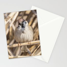 Tree Sparrow on branch (Passer montanus) Close Up Stationery Cards
