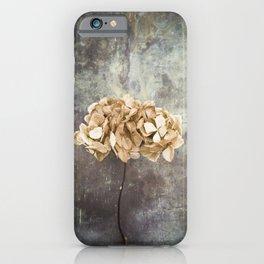 Dried Hydrangea iPhone Case