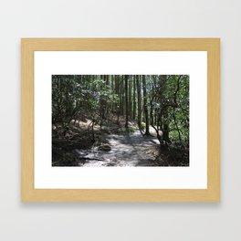 Abrams Falls Trail Framed Art Print