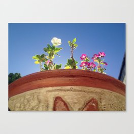 Sky and Flowers Canvas Print