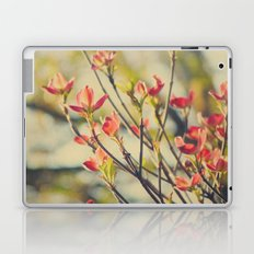 Vintage Red Dogwood Tree Flowers in Spring Warm Sunny Botanical Laptop & iPad Skin