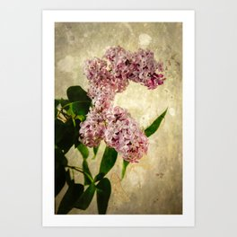 Vintage Lilacs in Bloom Art Print