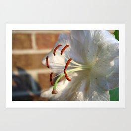 11th Anniversary Lillies #1 Art Print
