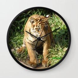 Young Tiger Wall Clock