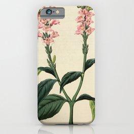 Flower 1340 justicia quadrangularis Square stalked Justicia15 iPhone Case