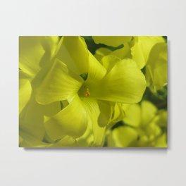 Glorious Glowing Yellow Metal Print