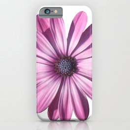 Spectacular African Daisy Isolated iPhone Case