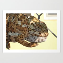 Chameleon Hanging On A Wire Fence Art Print
