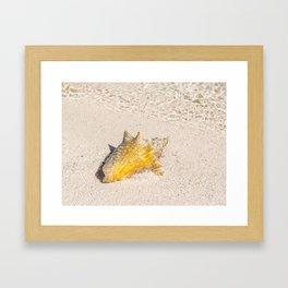 10632 Conch Framed Art Print