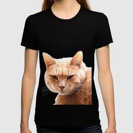 Red cat watching T-shirt