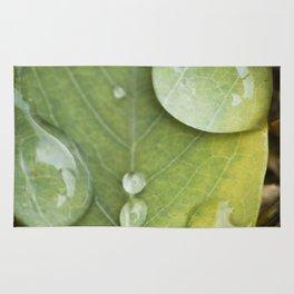 Raindrops on a green leaf Rug