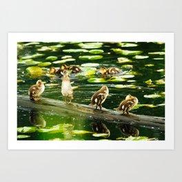 Duckling Stretch Art Print
