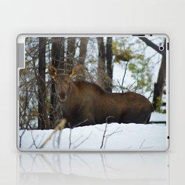 Moose calf in the snow, Canadian Rockies Mountains Laptop & iPad Skin