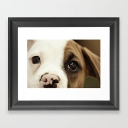 Boxer Nose Framed Art Print