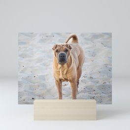 Shar Pei dog standing on the beach Mini Art Print