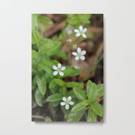 4 Tiny Wildflowers Metal Print