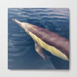 Rippling Dolphin Metal Print