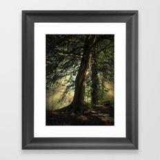 Forest Wakening. Framed Art Print
