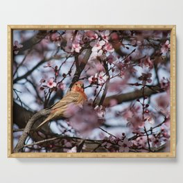 Spring Blossoms - Male House Finch Serving Tray