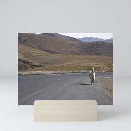 Lonely traveler goat in the road, Tucuman - Travel and Nature Photography Mini Art Print