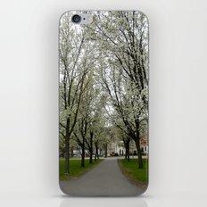 Boston Trees iPhone & iPod Skin