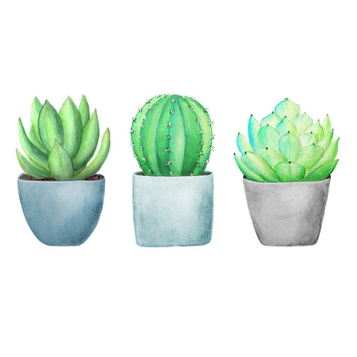 Succulent and Cacti Potted Garden Trio Comforters