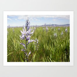 Indian Hyacinth Art Print