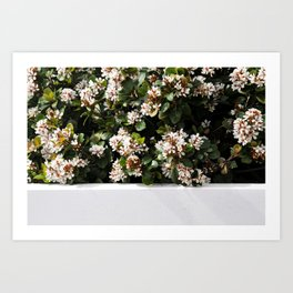 White Wall Florals Art Print