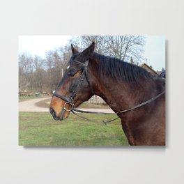 Horse head is Metal Print
