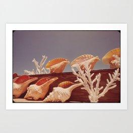 Souvenir Seashells Art Print