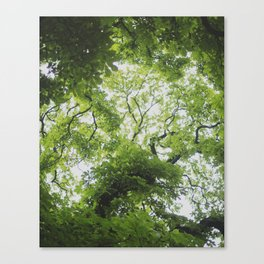Up in the Trees Above Canvas Print