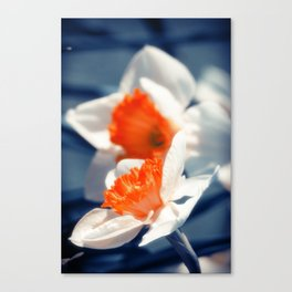Narcissus Flower Canvas Print