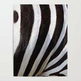 """Pop Safari 01 Zebra"" Poster"