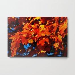 Mapple Leaves Metal Print