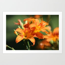 Day Lily Dance Art Print