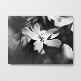 Petals - Black and White Floral Photo Metal Print