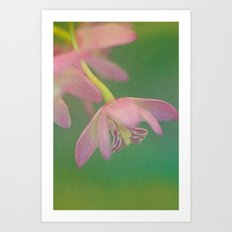 Delicate Beauty Art Print