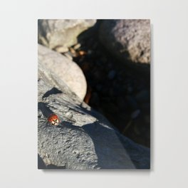 ladybug rock climbing  Metal Print